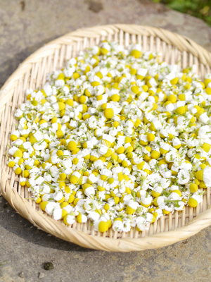 camomile_dry_web